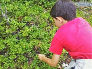"""Max Picking Blueberries"" by Josh Pawelek (Every child knows something about participating consciousness!)"